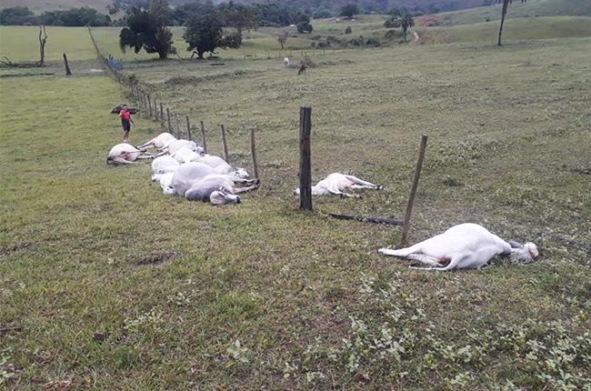 Dezesseis animais morrem eletrocutados por raio em fazenda de Itabela. (Foto: Divulgação)