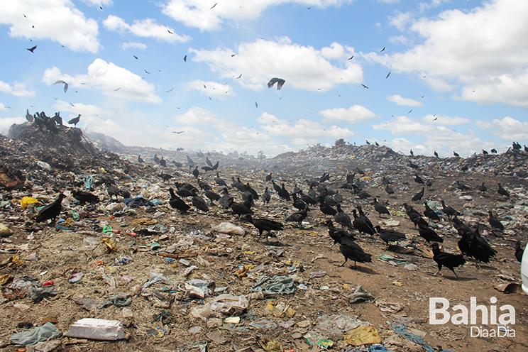 Lixão leva risco de diversas doenças a população. (Foto: Alex Gonçalves/BAHIA DIA A DIA)